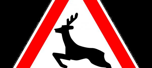 Besonders in bewaldeten Gebieten und an Feldrändern ist die Gefahr durch Wildwechsel groß.