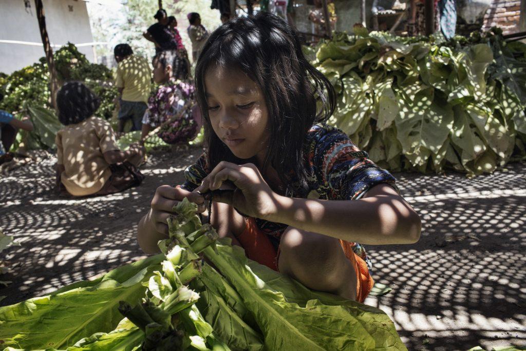 Ein 11-jähriges Mädchen bindet Tabakblätter zum Trocknen zusammen, Indonesien. © 2015, Marcus Bleasdale, für Human Rights Watch
