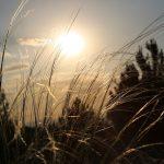 Solarthermie: Wichtiger Faktor für die Wärmewende