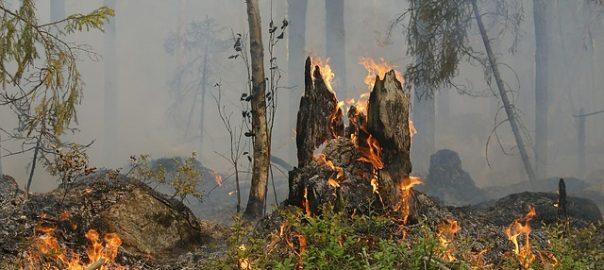 Hauptursache für Waldbrände ist der Mensch