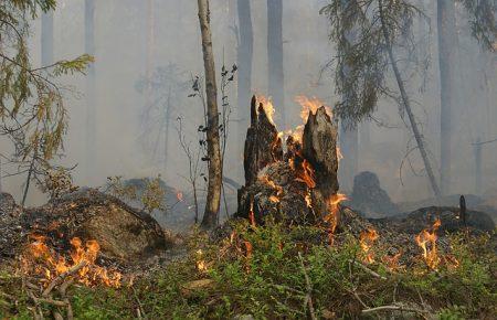 Sommer, Sonne, Gefahr: Wer zahlt bei Waldbränden?