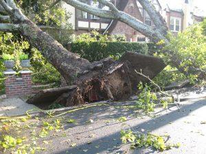 Bäume überprüfen ist Pflicht