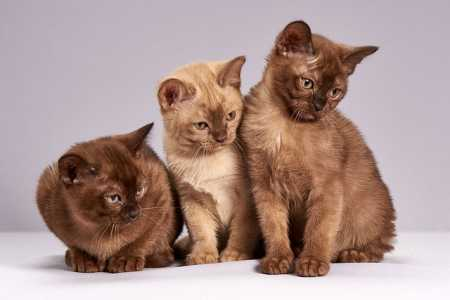 Tierhalterhaftpflicht - Im Ernstfall lieber gut abgesichert sein!