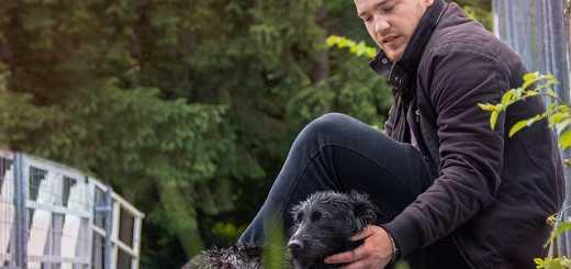 Tierkrankenversicherungen im Test: Stiftung Warentest prüft Tarife