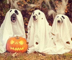 Hundehaftpflicht - in manchen Bundesländern bereits Pflicht!