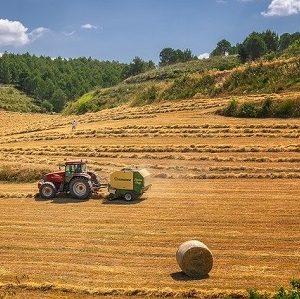 Die landwirtschaftliche Alterskasse sieht keine Grundrente vor