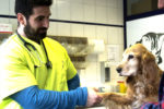 Tierarztpraxis Valantis Dokos in Iserlohn-Letmathe